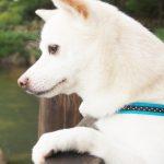 マヤ暦 白い犬